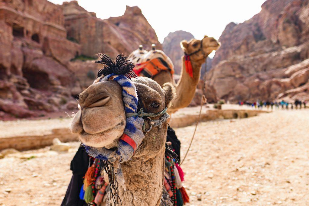 Reis til Petra med Amisol